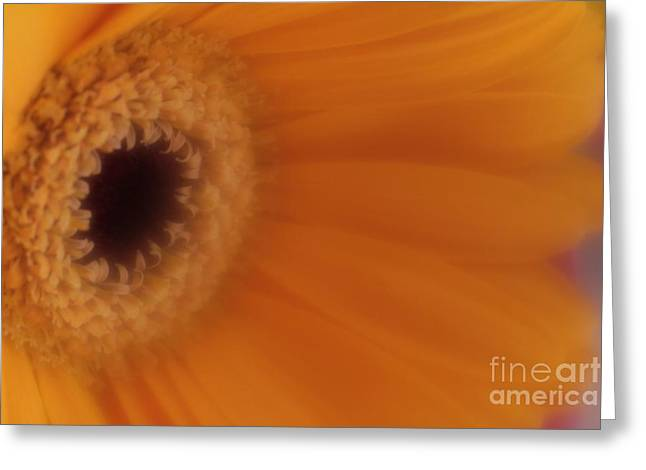 Greeting Card featuring the photograph Mr. Golden Sun by Mary Lou Chmura