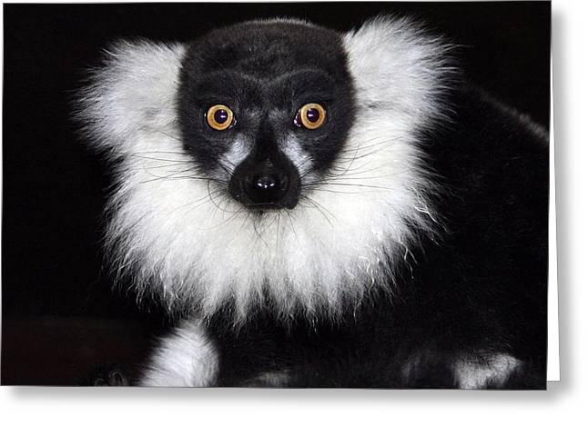 Greeting Card featuring the photograph Mr Lemur by Terri Waters