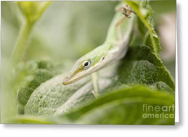 Mr Lizard Greeting Card by Erin Johnson