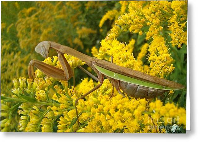 Greeting Card featuring the photograph Mr. Mantis by Sara  Raber