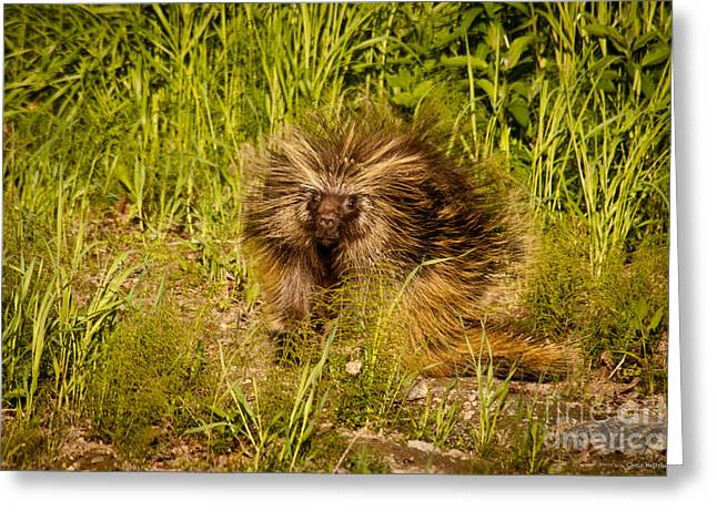 Mr. Porcupine Greeting Card