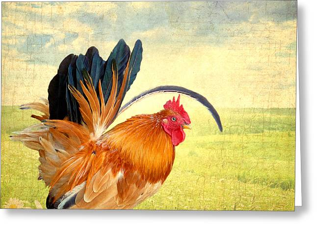 Mr. Rooster Greets The Day Greeting Card