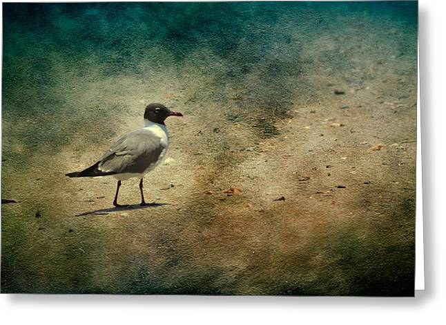 Greeting Card featuring the photograph Mr. Seagull by Michael Colgate