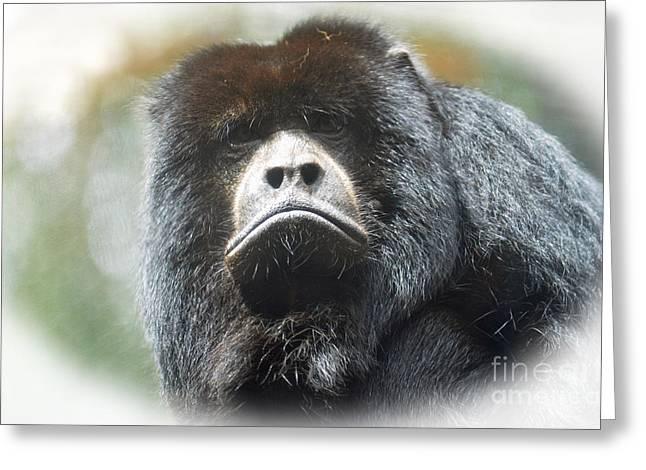 Mr Smiley A Black Howler Monkey Greeting Card by Jim Fitzpatrick