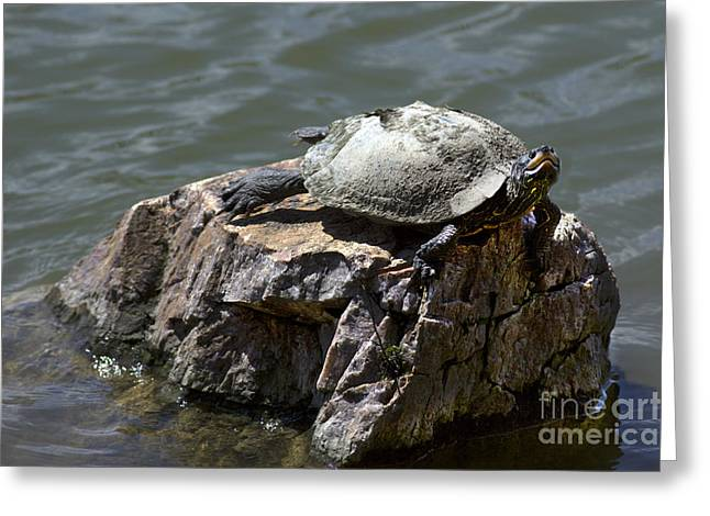 Mr Turtle Greeting Card by Elizabeth Chevalier