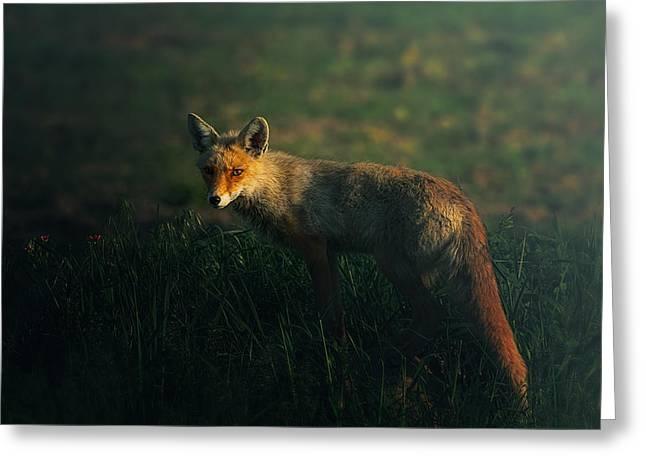 Mr.fox Greeting Card