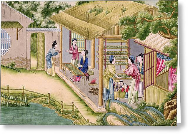 Ms 202 Fol.2  Learning About Silkworms, From A Book On The Silk Industry Gouache On Paper Greeting Card