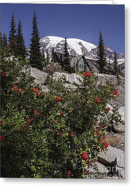 Mt Ash At Mt Rainier Greeting Card