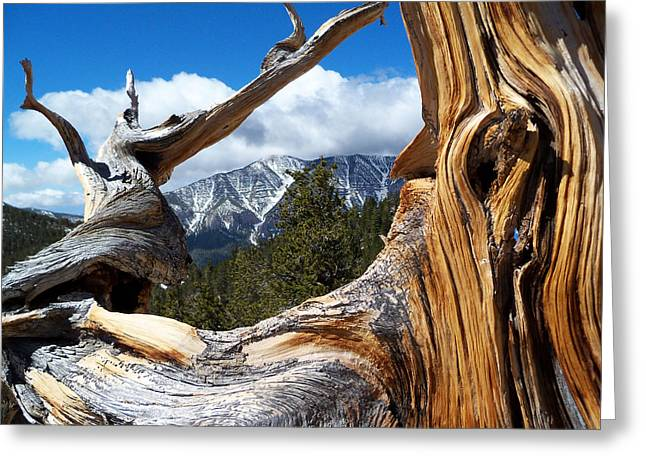 Mt. Charleston Thru A Tree Greeting Card