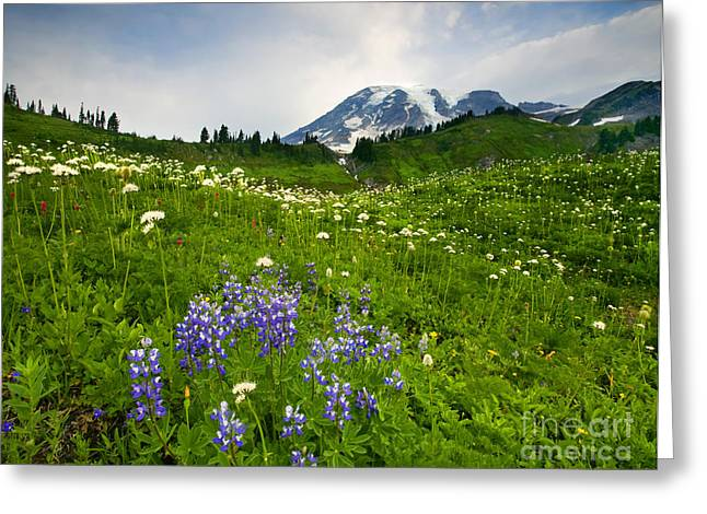 Mt. Rainier Wildflower Profusion Greeting Card