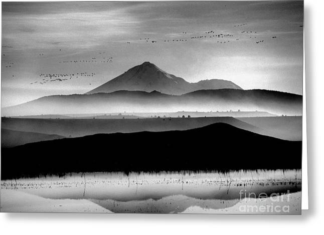 Mt. Shasta Greeting Card by Irina Hays