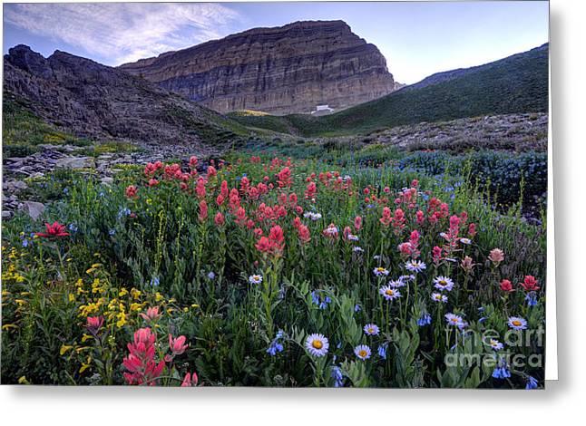 Mt. Timpanogos Wildflowers At Sunset Greeting Card