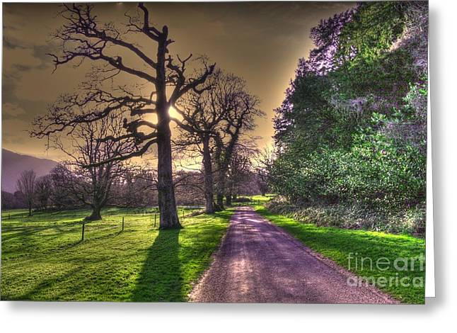 Muckross Park Kerry Ireland Greeting Card by Jo Collins