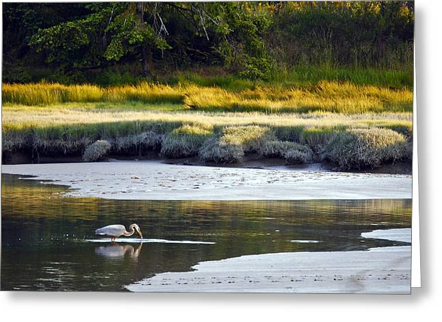 Mud Bay Heron 1 Greeting Card