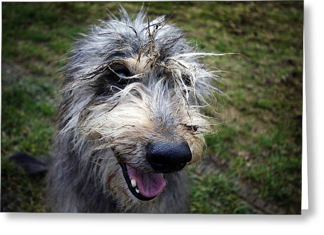 Muddy Dog Greeting Card