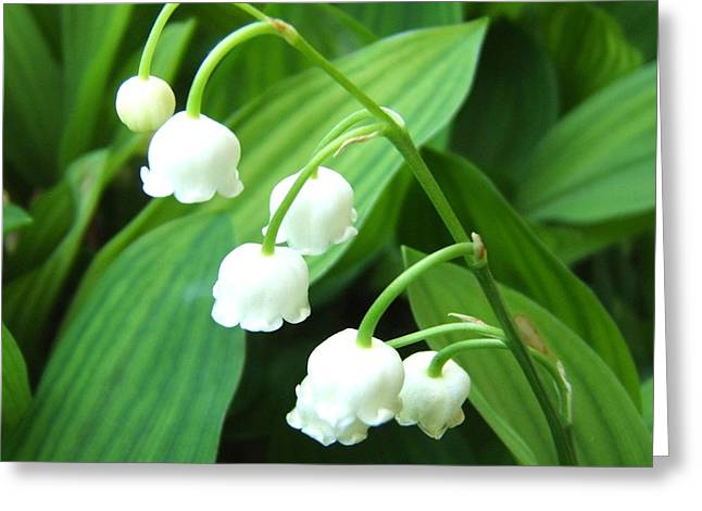 Muguet Greeting Card