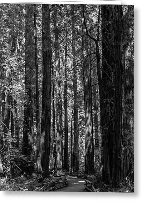 Muir Woods Giants Greeting Card