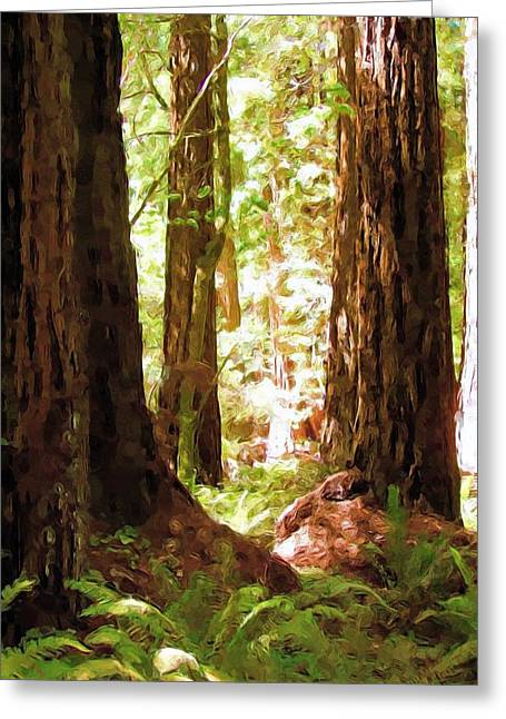 Muir Woods Greeting Card