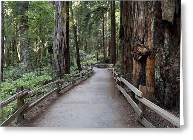 Muir Woods National Park Service Greeting Card