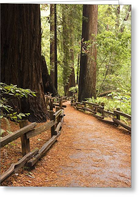 Muir Woods Trail Greeting Card