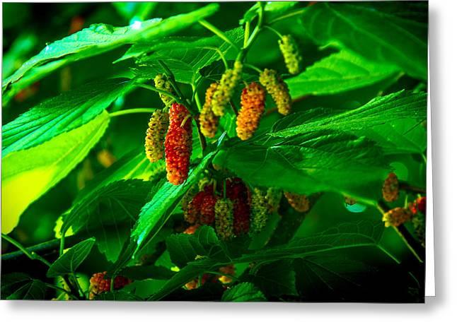 Mulberries - Fruit - Berries Greeting Card by Barry Jones