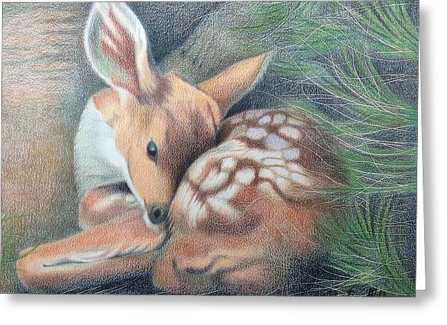 Mule Deer Fawn Greeting Card