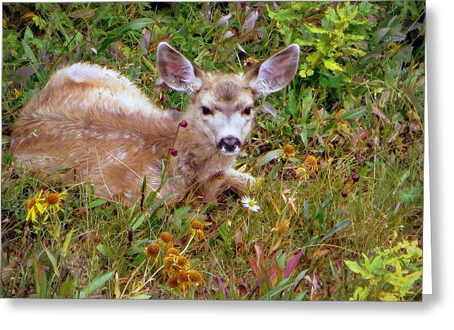 Greeting Card featuring the photograph Mule Deer Fawn by Karen Shackles