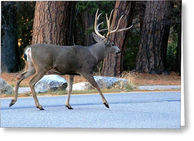 Mule Deer In Yosemite Greeting Card by Sheila Savage
