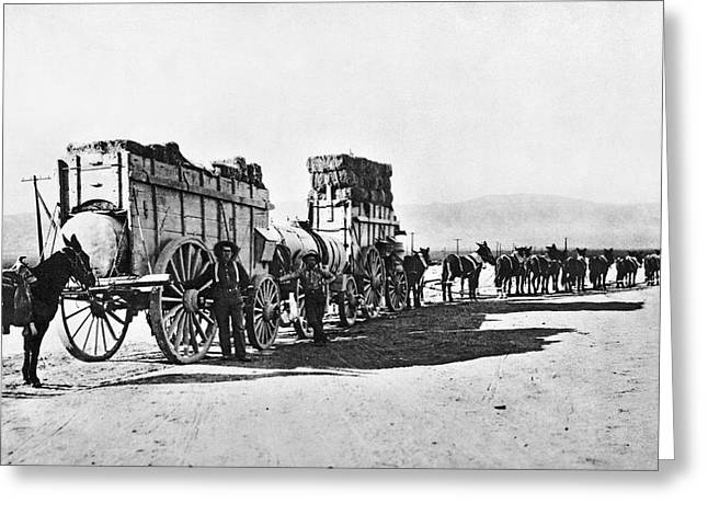 Mule Train Hauling Cargo Greeting Card by Underwood Archives