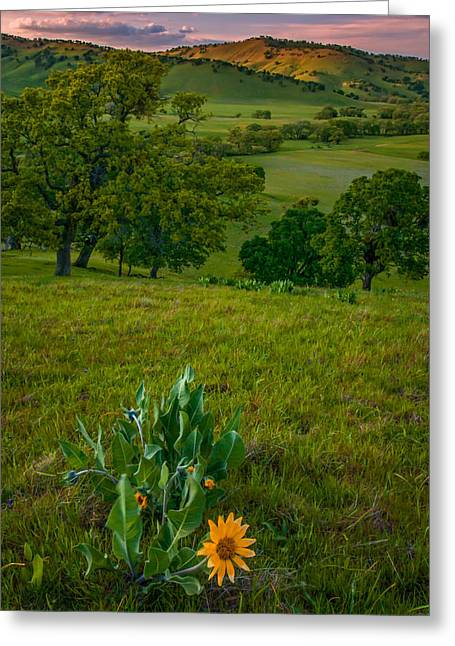 Mule's Ear At Sunset Greeting Card by Marc Crumpler