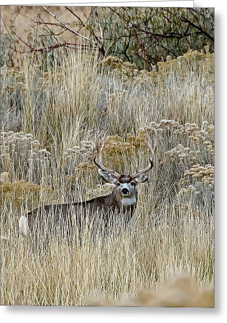 Mulie  Greeting Card