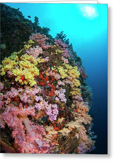 Multi Coloured Soft Coral On Reef Greeting Card by Scubazoo