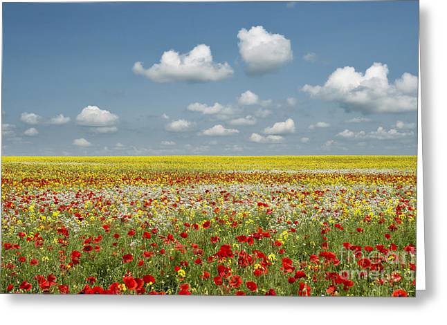 Multicoloured Field Greeting Card by Tim Gainey