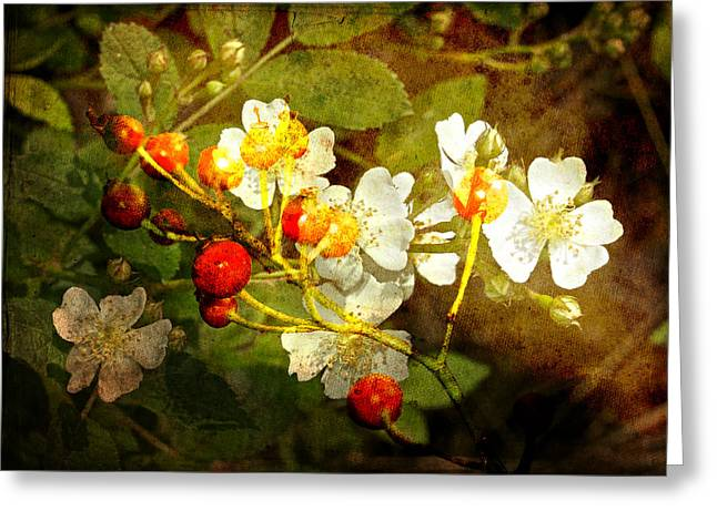 Multiflora Rose And Rose Hips Greeting Card by Mother Nature