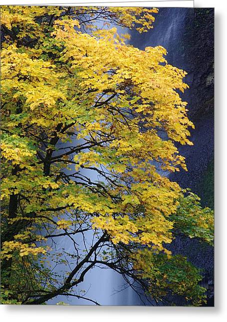 Multnomah Falls Maple Greeting Card