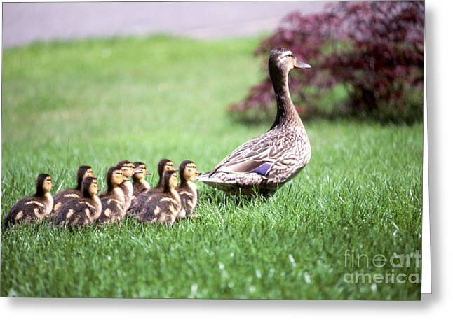 Mumma Duck And Kids Greeting Card by King Wu