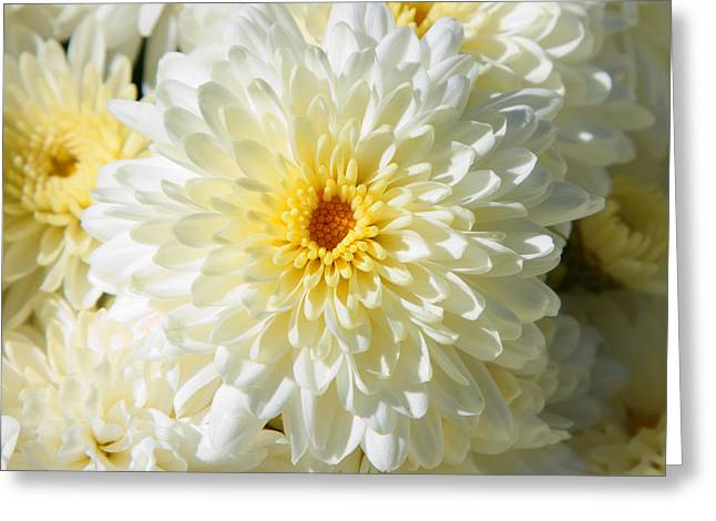 Greeting Card featuring the photograph Mums The Word by Courtney Webster