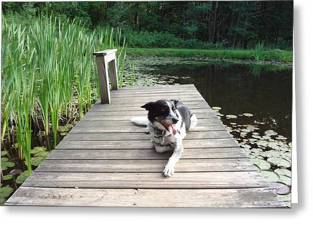 Mundee On The Dock Greeting Card by Michael Porchik