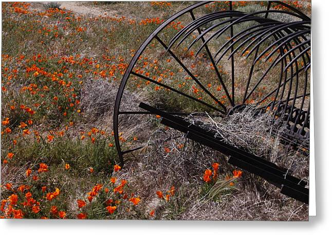 Greeting Card featuring the photograph Munz Poppy by Ivete Basso Photography