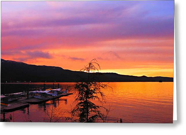 Murphy's Landing Greeting Card by Karen Horn