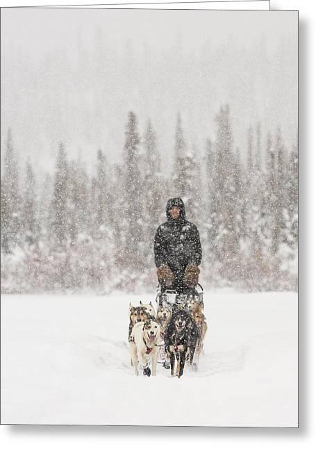 Mushing Through A Snow Storm Greeting Card by Tim Grams