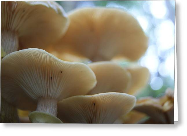 Mushroom Canapy Greeting Card by Anne Williamson