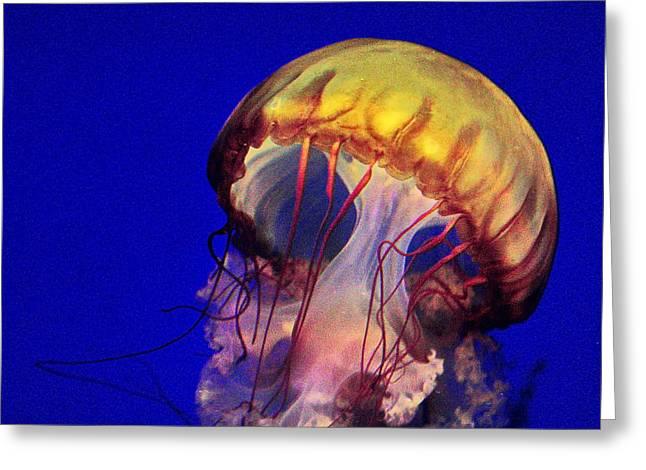 Mushroom Jelly Fish Greeting Card by Russ Harris