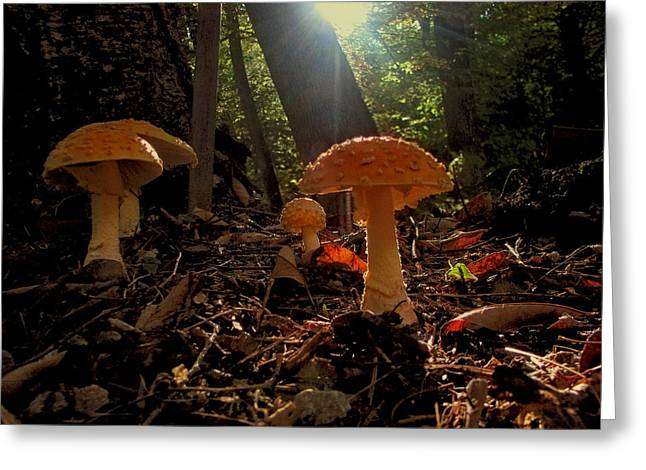 Greeting Card featuring the photograph Mushroom Morning by GJ Blackman