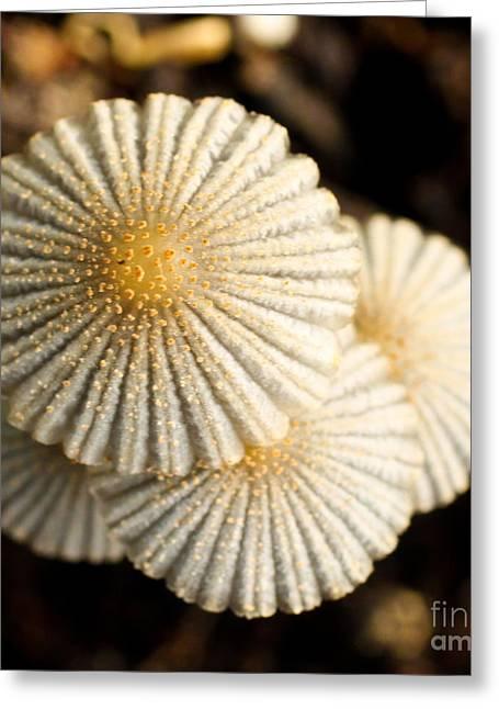 Mushroom Tops Greeting Card