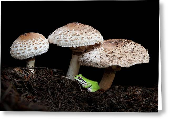 Mushrooms And Company Greeting Card by Angie Vogel