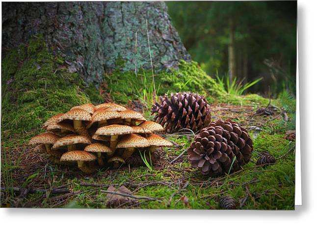 Mushrooms And Pine Cones On The Forest Greeting Card