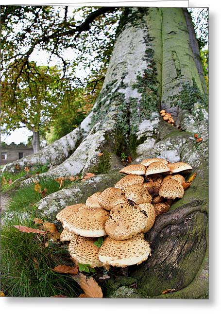 Mushrooms Growing At The Base Of A Tree Greeting Card