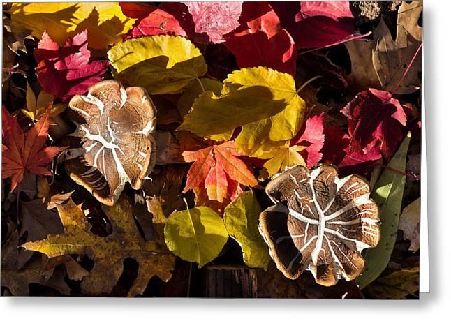 Mushrooms In Fall Leaves Greeting Card