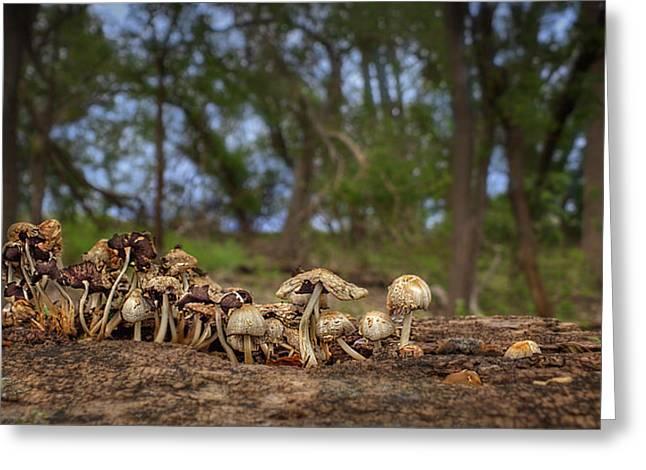 Mushrooms In The Woods #2 Greeting Card by Nikolyn McDonald